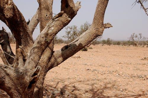 Fotobanka sbezplatnými fotkami na tému púšť