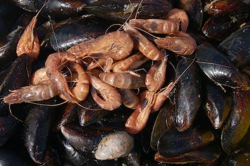 Fotobanka sbezplatnými fotkami na tému dary mora, jesť, kreveta, pleseň