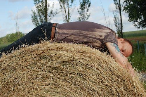 Безкоштовне стокове фото на тему «сіно, спати»
