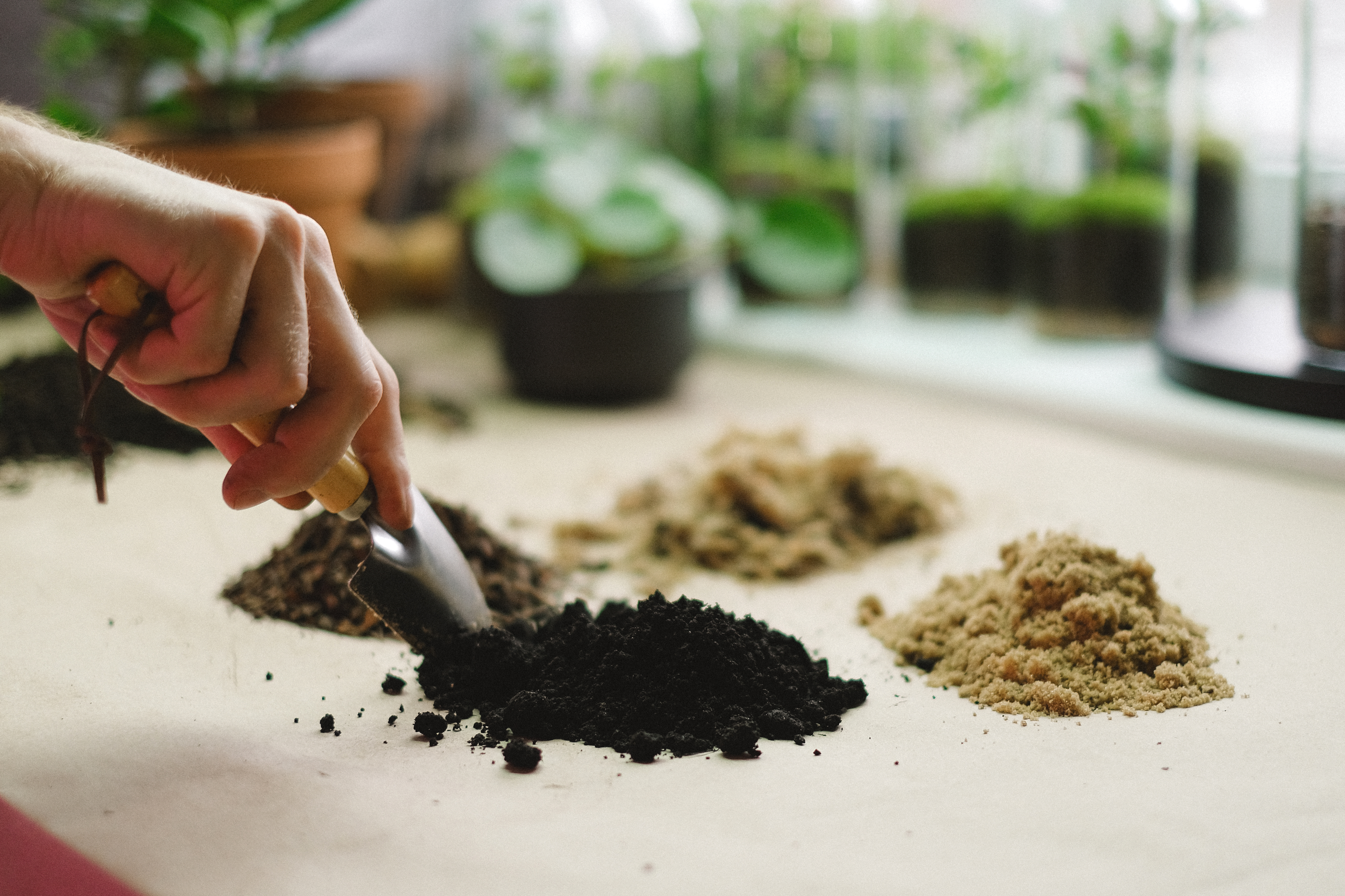 food people sand dry