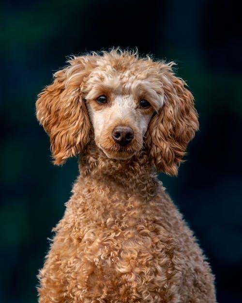 Cute purebred dog looking at camera in park