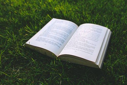Imagine de stoc gratuită din carte, citind, iarbă, literatură