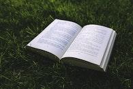 grass, meadow, book