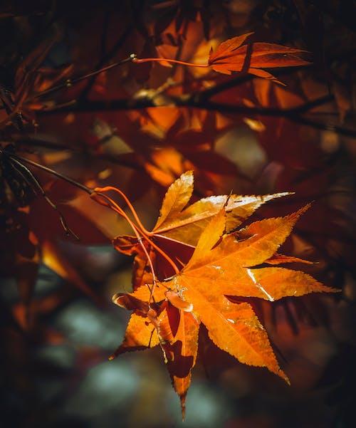 가을, 가을 배경, 가을 벽지의 무료 스톡 사진