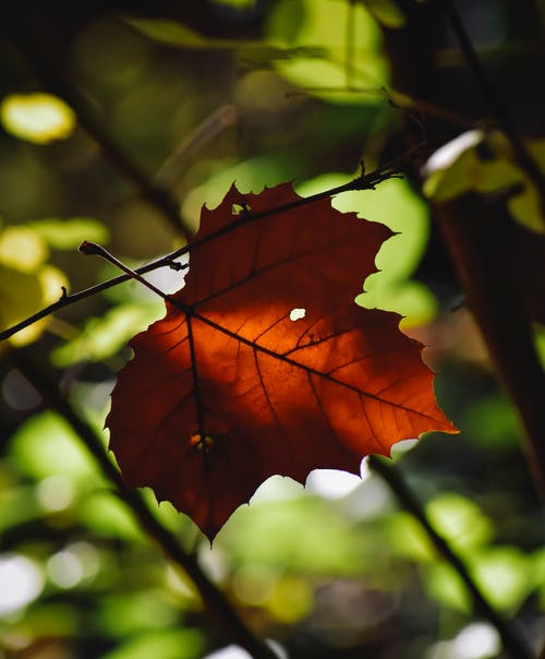 Low angle of yellow autumnal leaf growing against foliage on trees in nature