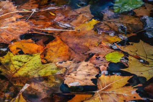 Darmowe zdjęcie z galerii z drewno, drzewo, jesień, klon