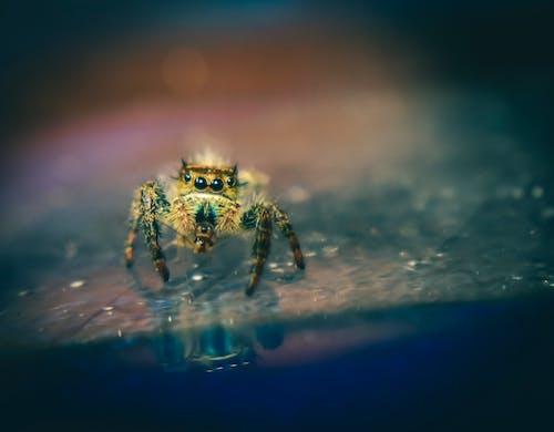 Darmowe zdjęcie z galerii z bezkręgowiec, dzika przyroda, dziki, fobia