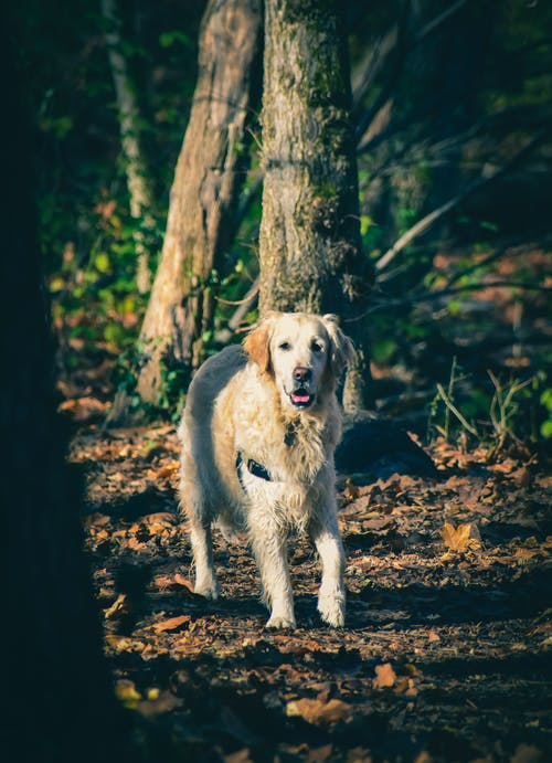 Purebred dog walking between trees in nature