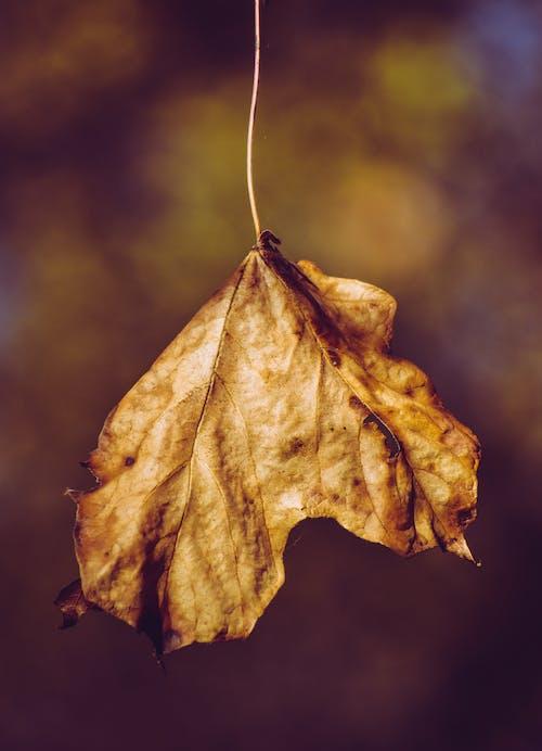 Dry autumn leaf hanging on thin twig