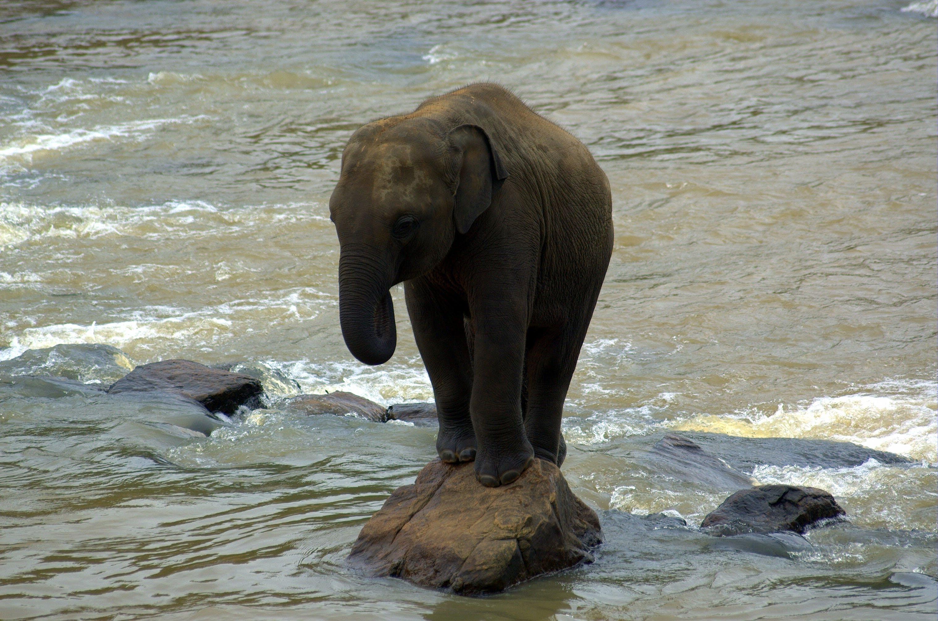 einsam, elefant, fels