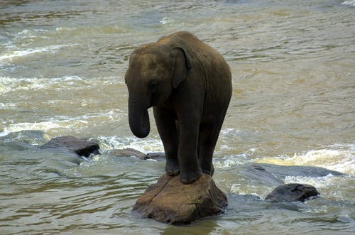 Cute elephant drinking water from rocky river