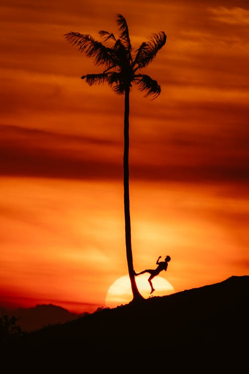 Silhouette of Man Jumping on Palm Tree during Sunset