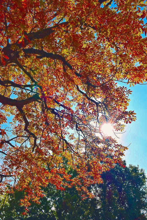 Free stock photo of colors of autumn, fall colors, light