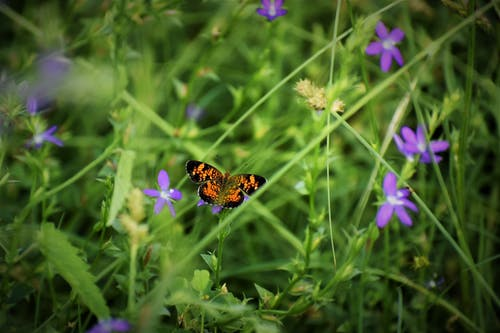 Black and Orange Butterfly on Purple Flower