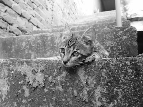 Tabby Kitten Lying on Concrete Stairs