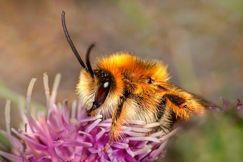Fotos de stock gratuitas de abeja, al aire libre, antena