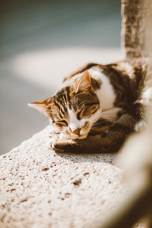 Kostnadsfri bild av betong, däggdjur, djur
