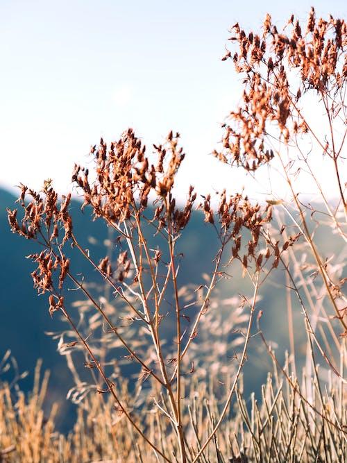 Foto stok gratis alam, atardecer, bunga-bunga