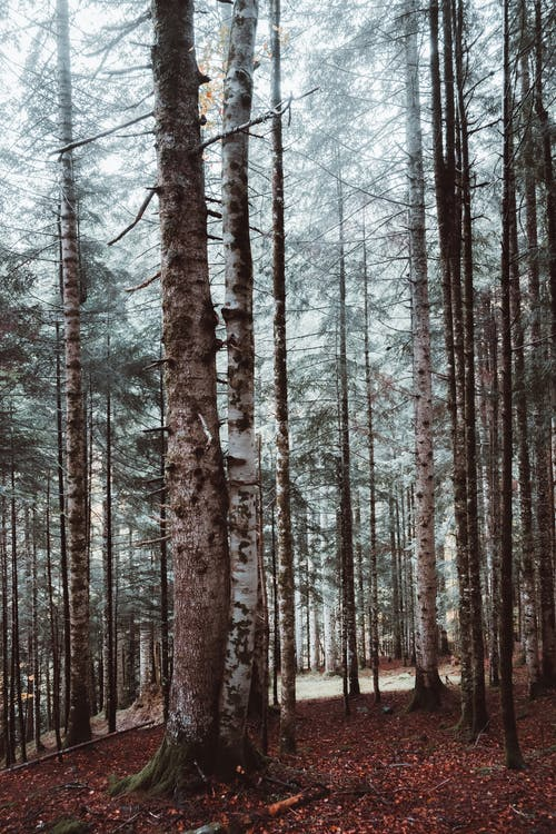 Foto stok gratis alam, batang pohon, cabang