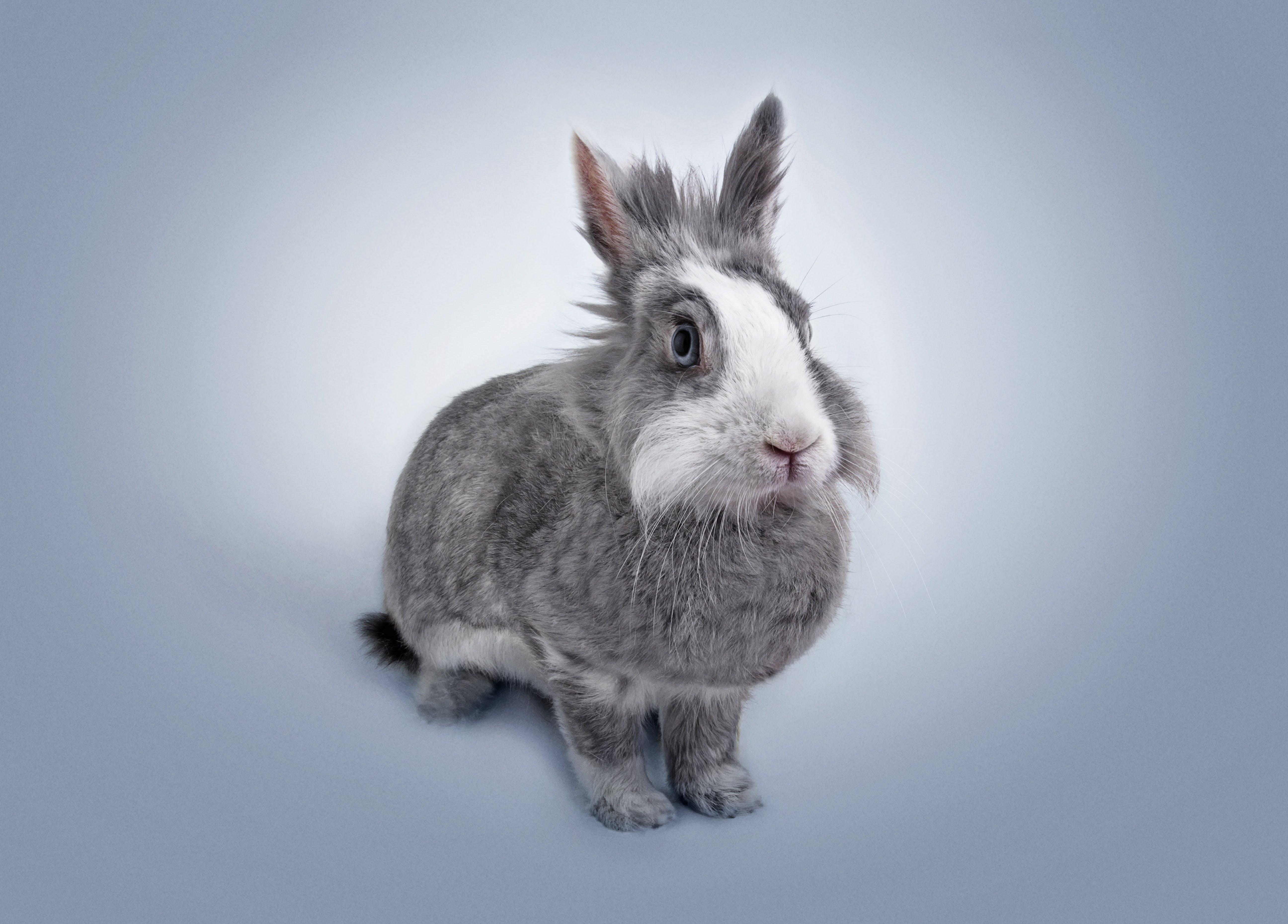 Foto profissional grátis de adorável, animal, animal de estimação, animal jovem
