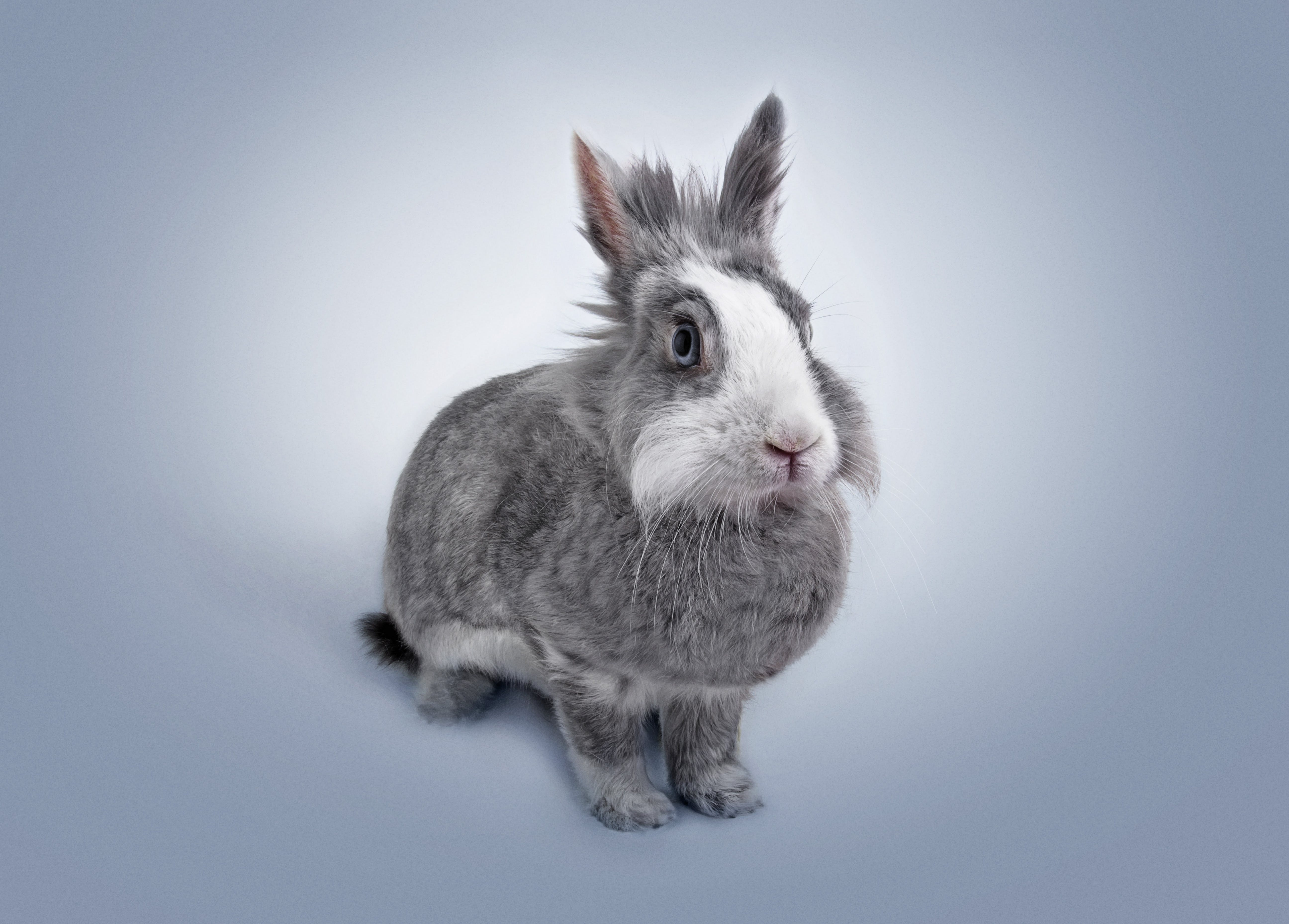 adorable, animal, cute