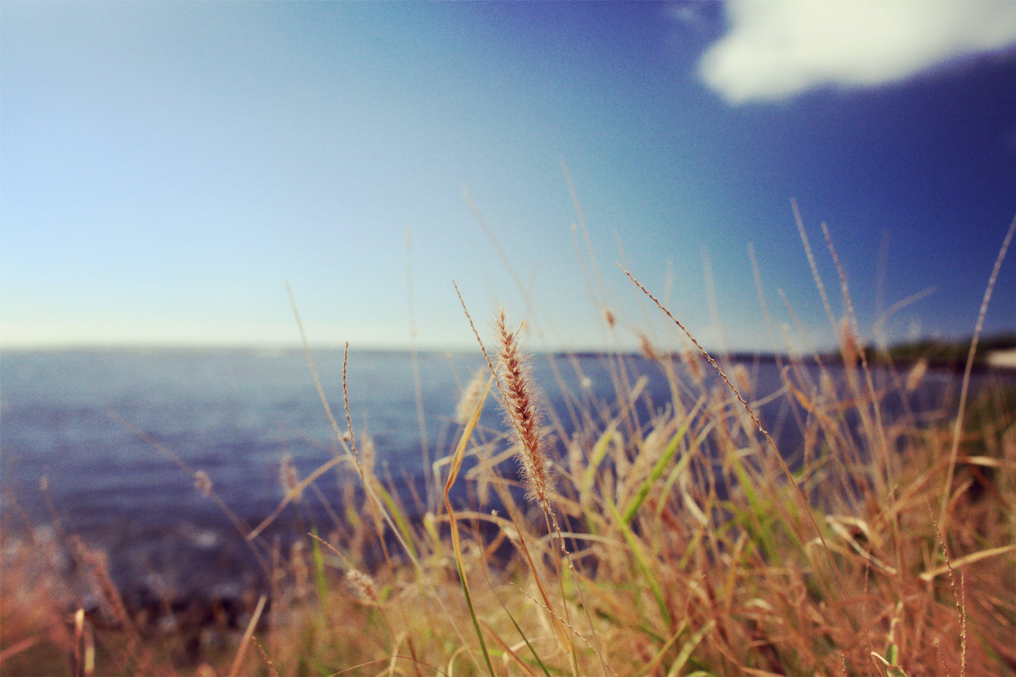 beach, coast, depth of field
