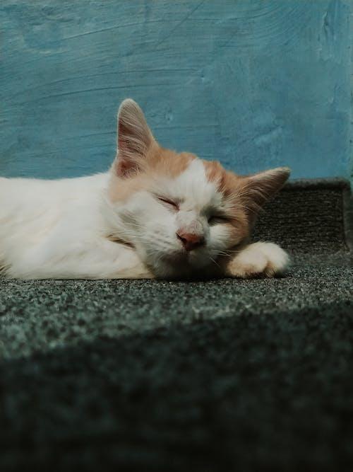 休息, 冷靜, 動物 的 免費圖庫相片