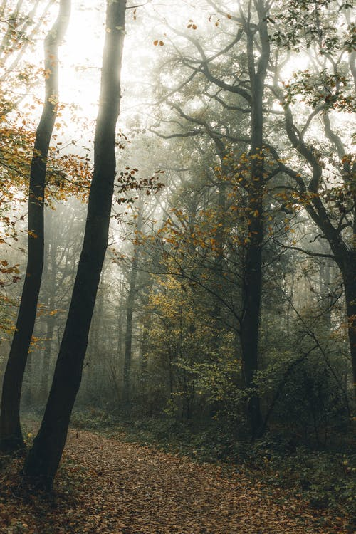 Empty path in forest on foggy day in fall