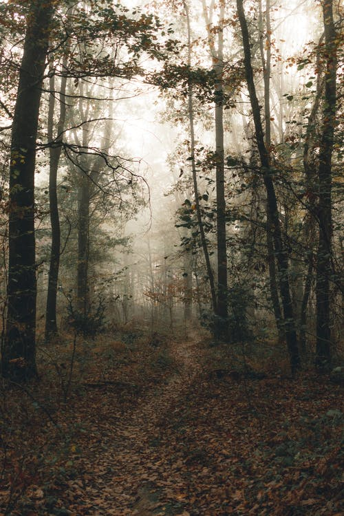 Empty wavy path with faded leaves between overgrown trees in woods under misty sky