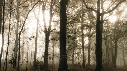 High trees in forest under shiny sky in fog