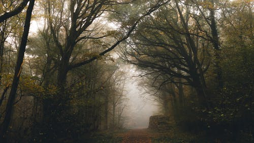 Empty pathway between overgrown trees with wavy branches growing in misty weather in fall