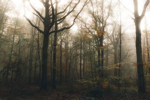 Overgrown autumn trees in woods under foggy sky