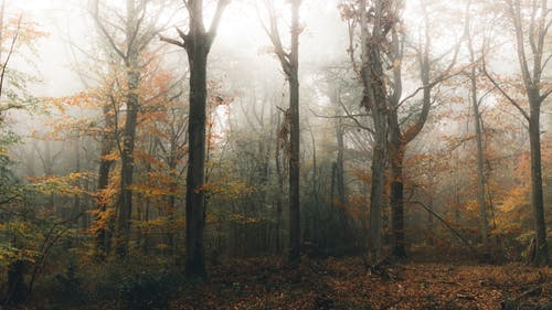 Picturesque view of woodland with high trees and golden path under misty sky in daylight