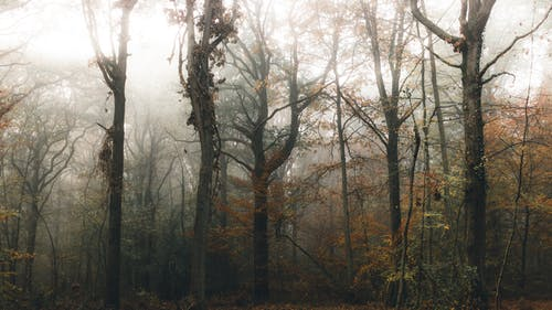 Dry tree trunks in forest in foggy weather