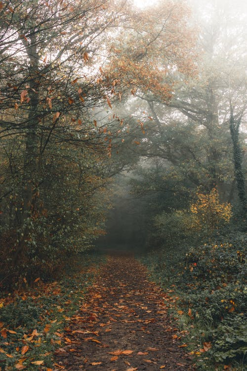Empty path between autumn trees in misty weather