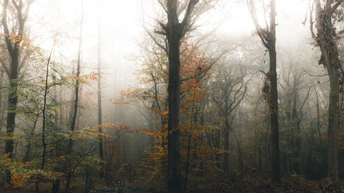 Majestic autumn trees in forest on foggy day
