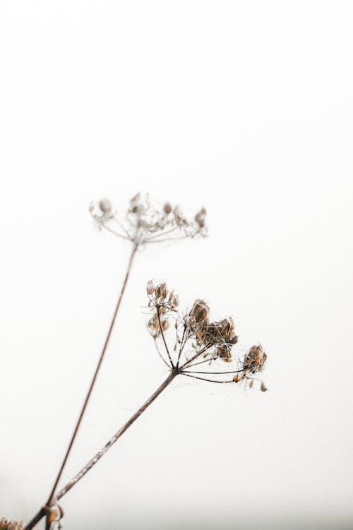 คลังภาพถ่ายฟรี ของ กลางวัน, ก้าน, ก้านดอก