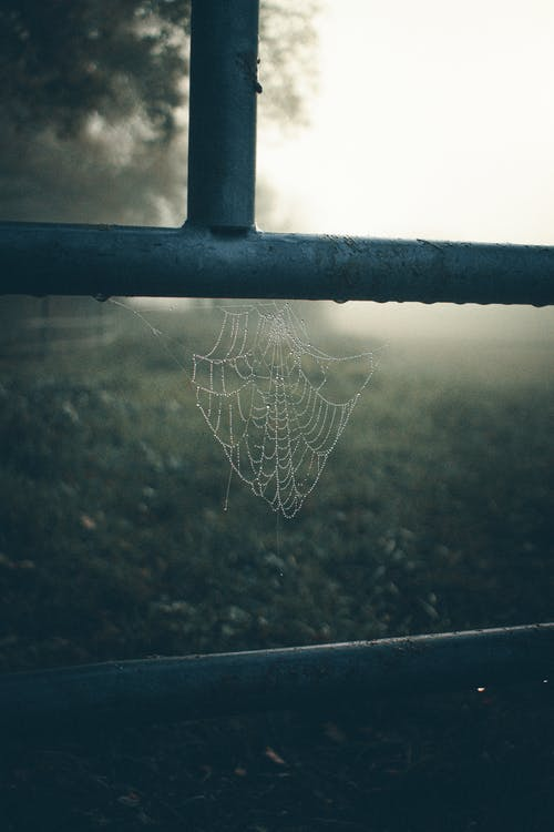 Spider Web on Black Metal Fence