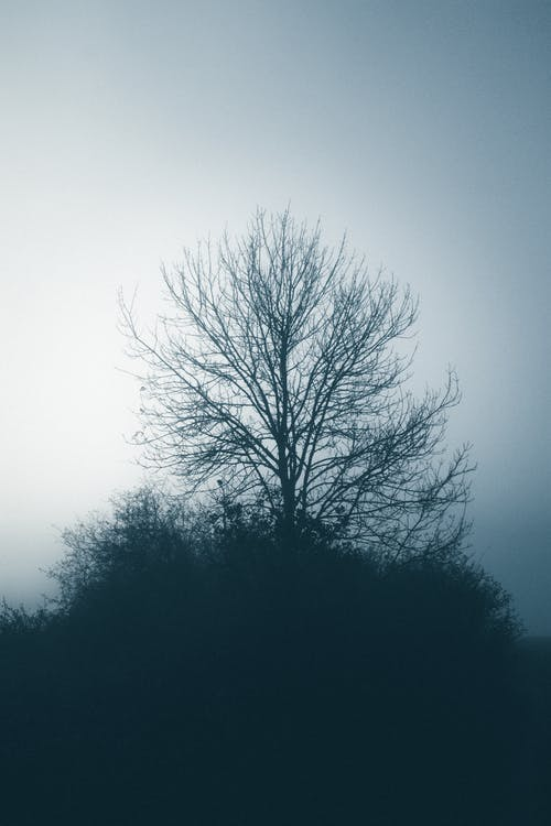 Leafless tree on hill in cold misty weather