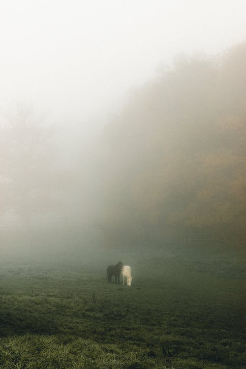 Gray and chestnut horses eating grass in field near trees under cloudy sky in mist
