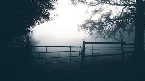 Black Wooden Fence Near Trees