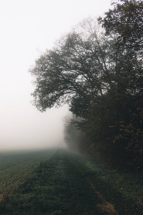 Green Trees on Green Grass Field during Foggy Weather