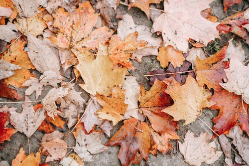 Autumn leaves placed on ground