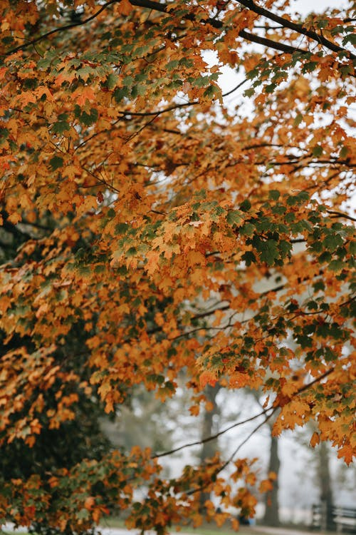 Thin branches of tree with orange and green leaves growing on street in park on blurred background in fall season