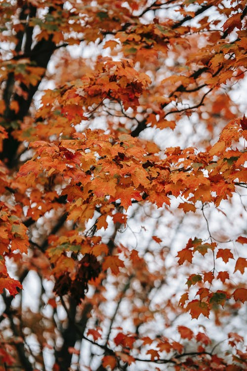 Branches of tree in autumn forest