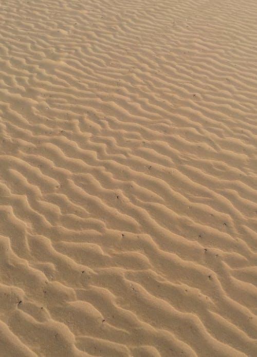 乾旱, 乾的, 冒險, 堅韌不拔 的 免費圖庫相片