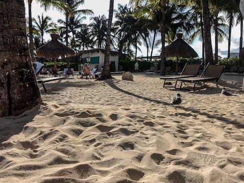 Immagine gratuita di agua de mar, arena, palma