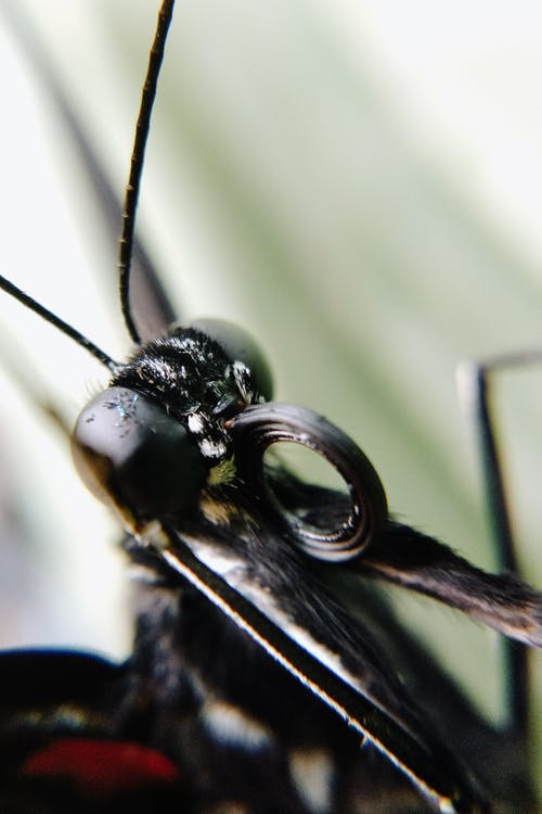Black and Yellow Dragonfly in Macro Photography