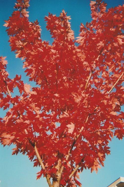 Kostenloses Stock Foto zu 35 mm, 35mm film, autumn, fall