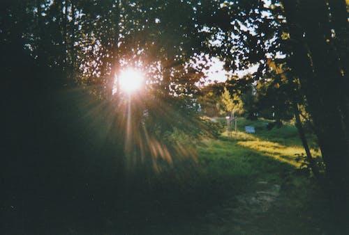 Kostenloses Stock Foto zu 35mm film